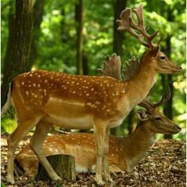 Munj Cutout Deer